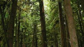 tall-redwood-trees-1604