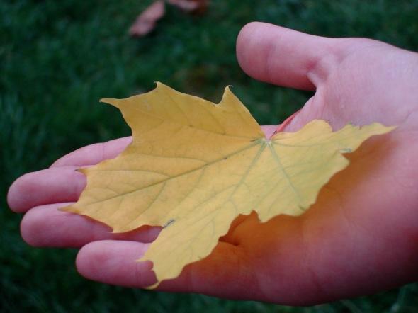 frunză